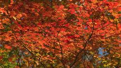 Autumn 008 (stock movie HD material)