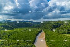 空撮/北部/慶佐次湾のヒルギ林 Y2640