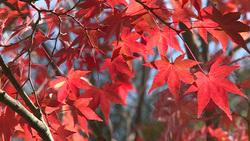 Autumn 010 (stock movie HD material)