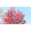 Autumn 002 (stock movie HD material)
