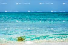 沖縄本島/大宜味のビーチ 218C8474